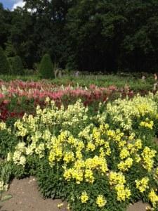 photo Chenonceau garden